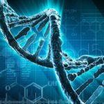 fenotipo y genotipo
